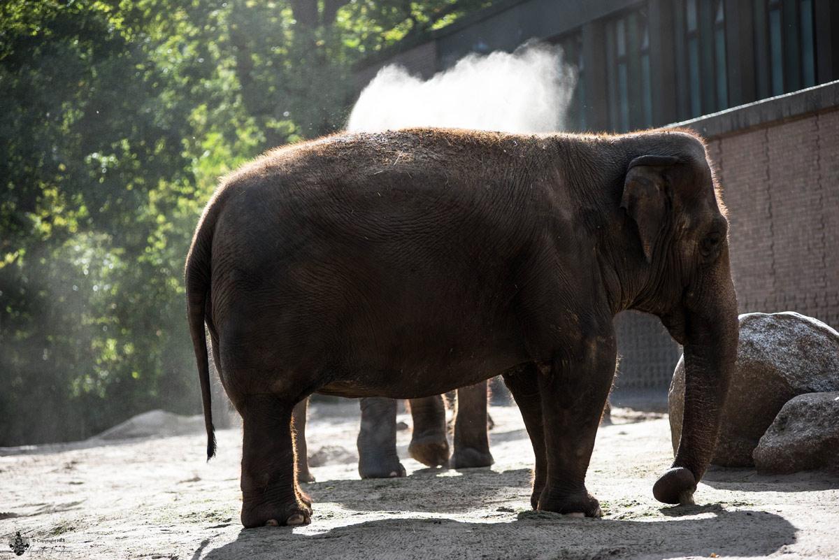 Elefant im Berliner Zoo