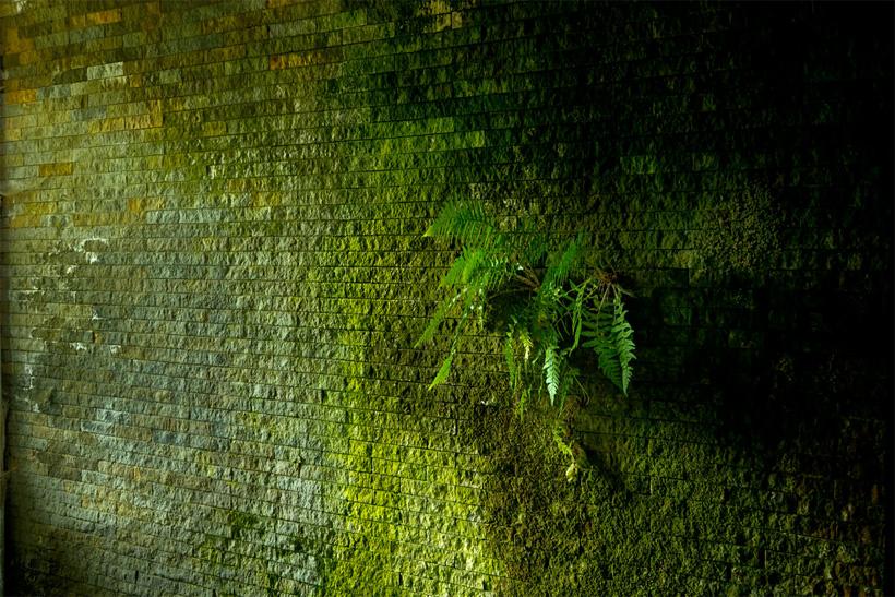 Honecker Bunker - Wand mit Wildwuchs